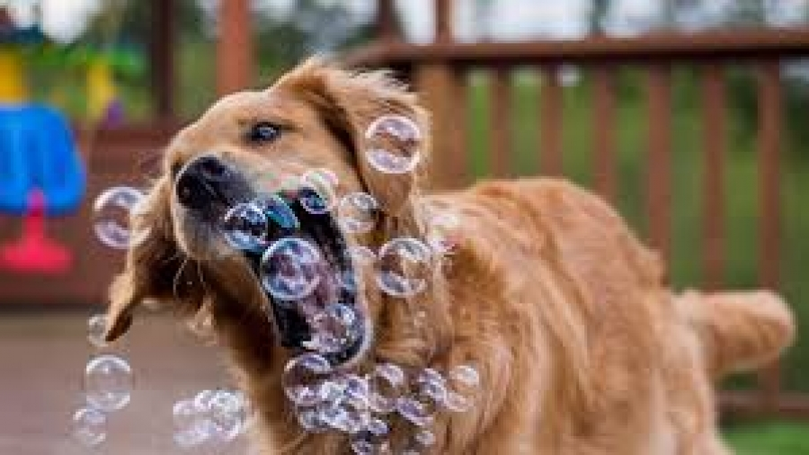 dog enrichment