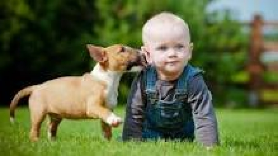 kid and bull terrier