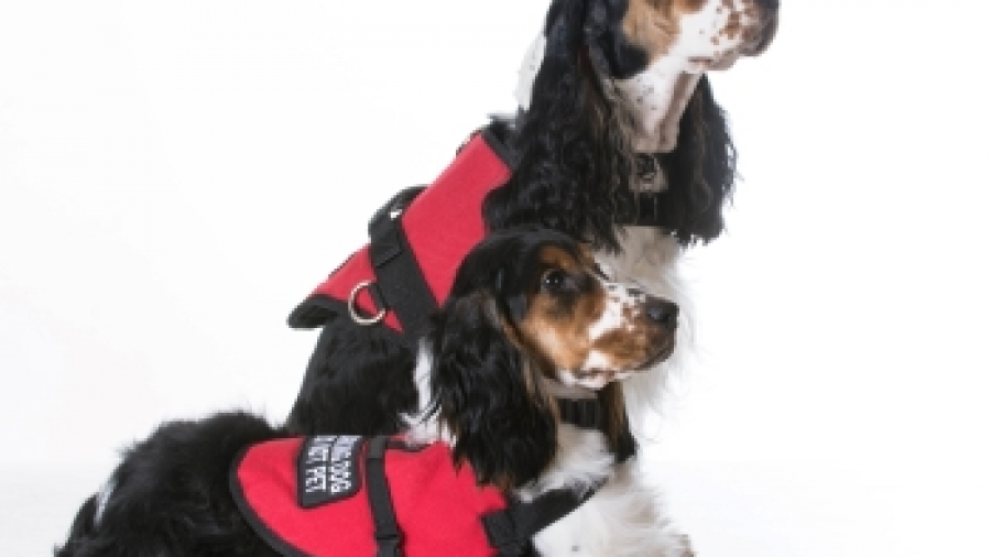 medical dogs